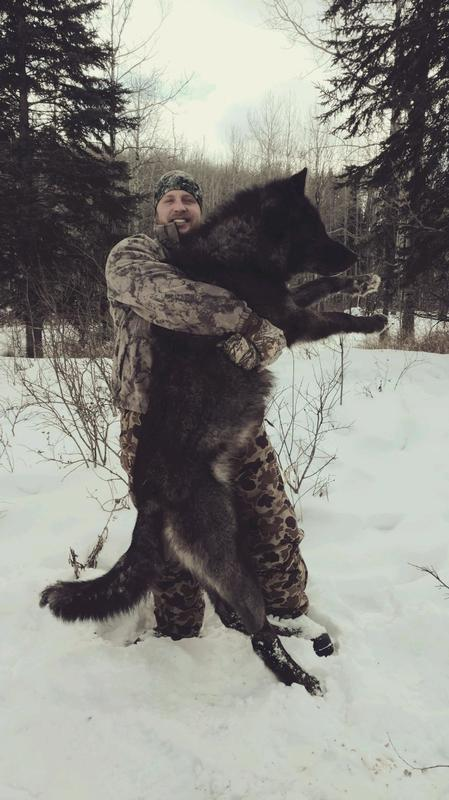 Giant Trophy Wolf-Chasin Tail Charters